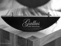 Gallus-Aquarius-12
